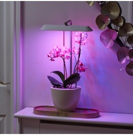 AG650 Auraglow Hydroponic Plant Grow Light