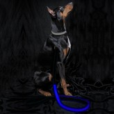 Auraglow dog lead blue