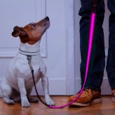 Auraglow dog lead pink